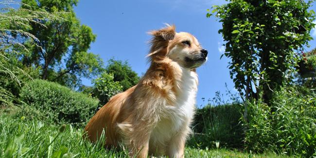 Tout savoir sur l'insuffisance rénale chez le chien