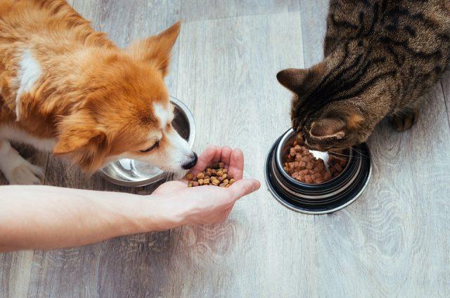 Quel animal peut manger de la patate douce ?