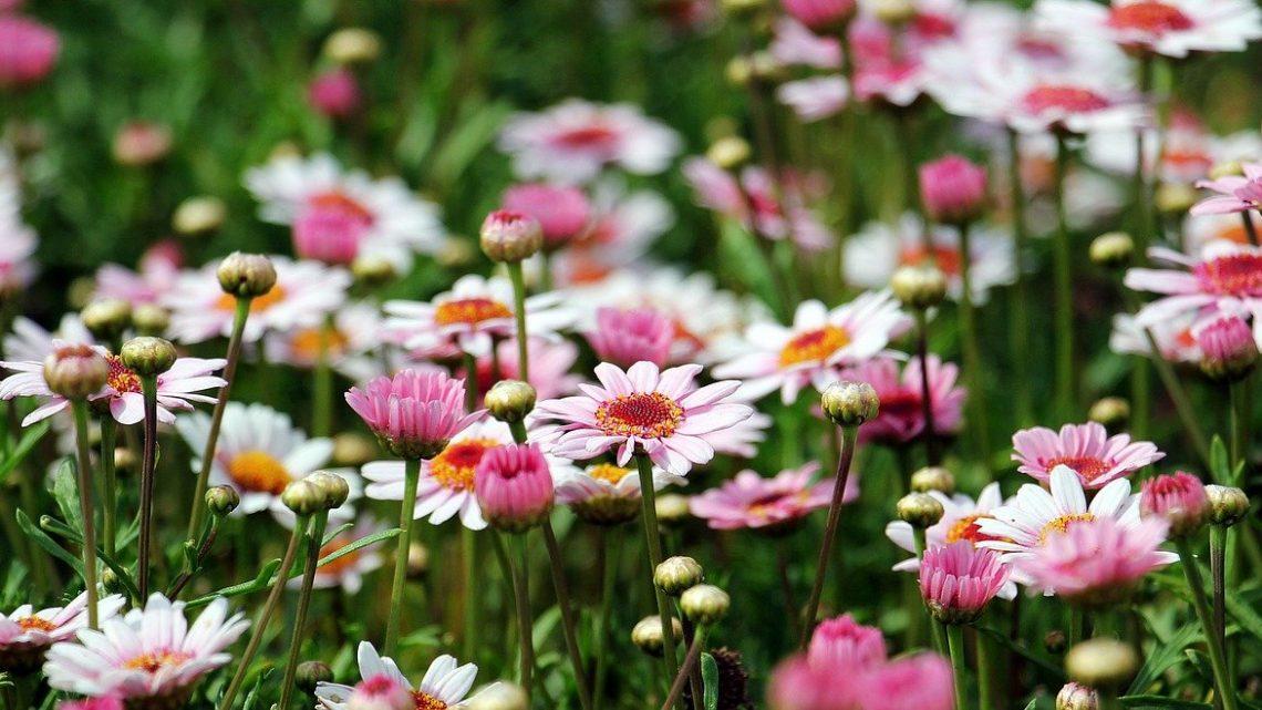 Comment réussir son jardin paysager ?